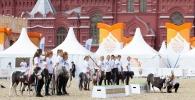 1 кремль (21)
